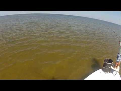 Tampa Bay Fly Fishing for Redfish