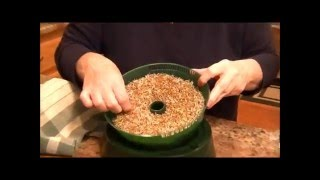 Sprouting Alfalfa Seeds 101 Grow Your Own