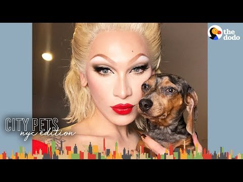 Spoiled Dogs Walk the Runway with Miss Fame NYC | The Dodo City Pets