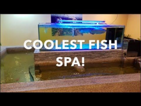COOLEST FISH SPA!