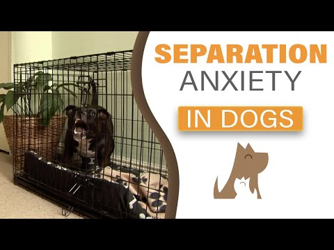 Consultation on separation anxiety - The Dog Guardian