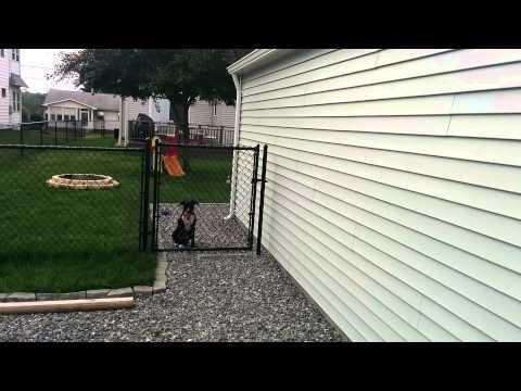 My dog climbs over chain link fence