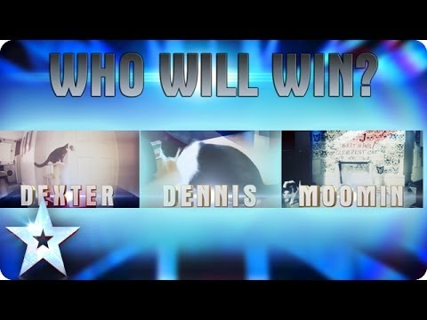 Who is Britain's Cleverest Cat? | Britain's Got Talent 2014