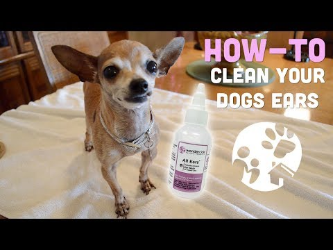 How to Clean Your Dog's Ears With Wondercide All Ears Ear Wash