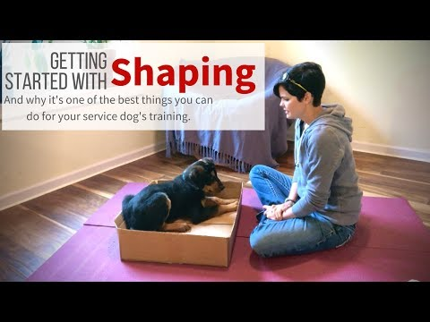 Shaping and your service dog.