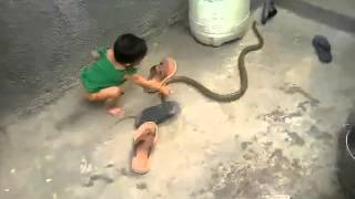 Whatsapp Funny and Viral Videos 3