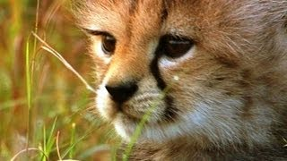Hiding from danger - Little Big Cat - BBC