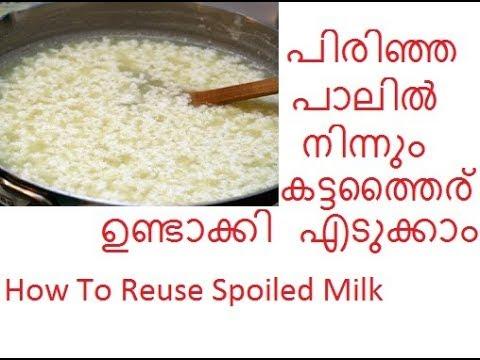 പിരിഞ്ഞ പാല് കൊണ്ട് തൈര് ഉണ്ടാക്കാം/Making Curd from Spoiled Milk