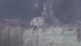 Jimmy Spithill makes the blood flows big time on this monster buck