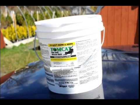 Ways to Kill Deer Ticks and Stop Lyme Disease