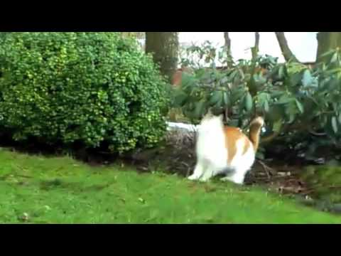 How to lose weight? - for cats