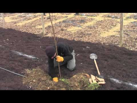 Zone 1 & 2 Food Forestry Project