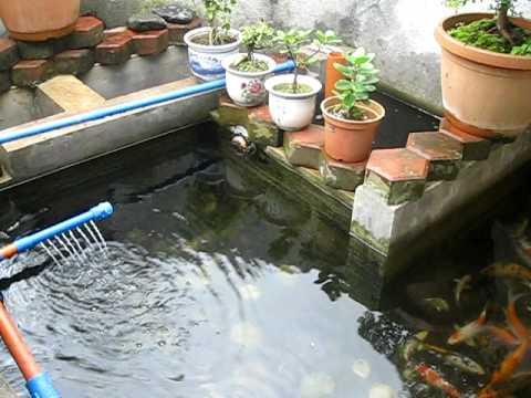 Andre's small KOI pond w/ DIY filter