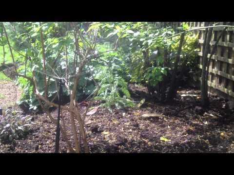 london irrigation for flower beds, quickclickirrigation.com