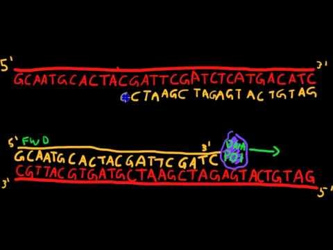 Primer Design for PCR