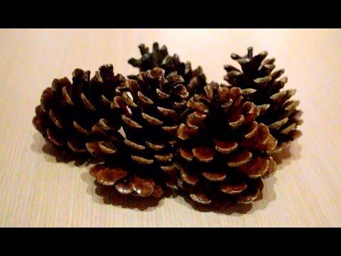 How to Preserve Pine Cones