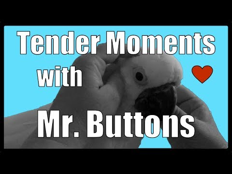 Tender Moments with Mr. Buttons