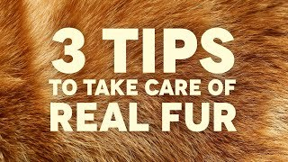 3 TIPS TO TAKE CARE OF REAL FUR