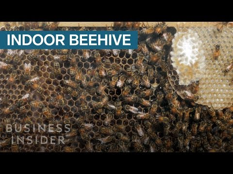 This Wall-Mounted Glass Beehive Lets You Keep Bees Inside Your House