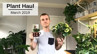 Houseplant Haul | March 2019