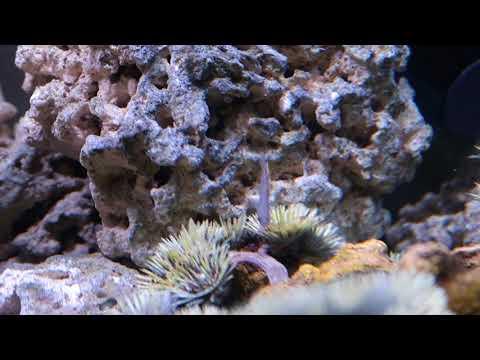 Commuity Aquarium Update Dec 2017