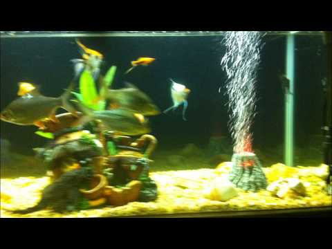 Fish tank in wall