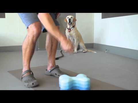 What Keeps a Dog From Biting the Walls? : Dog Behavior & Health