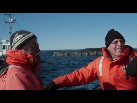 Our Sustainable Seafood Commitment | Giant Eagle