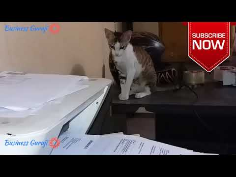 Funny cat - my office new Employee !