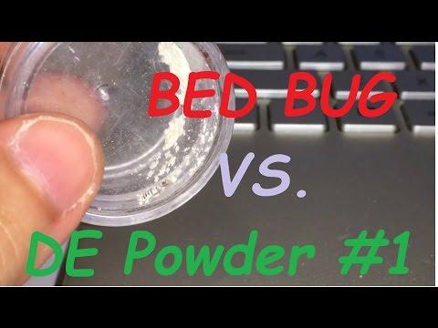 Bed bug vs Diatomaceous Earth #1