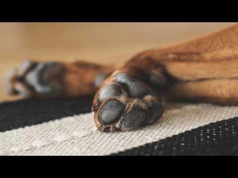 DOG DISINFECTANT IRELAND