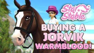 jorvik warmblood update Videos - 9tube tv