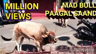 Download Pagal sand, पागल सांड ने दौड़ाया बाजार