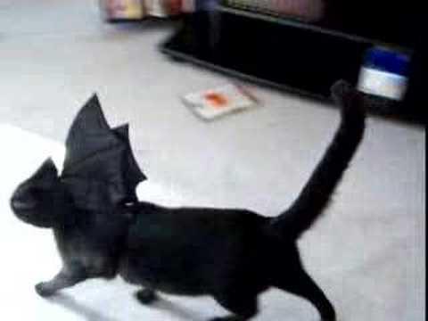 luna and sancha, bat cats