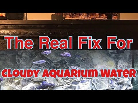 Real Fix: Cloudy Tank Water How To Really Fix Cloudy Aquarium Water Sparkling Clear Fish Tank Water
