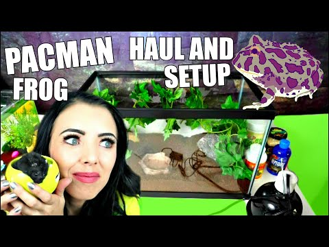 PACMAN FROG TANK SETUP AND HAUL!
