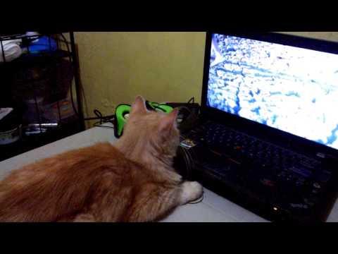 CAT WATCHING HORROR MOVIE
