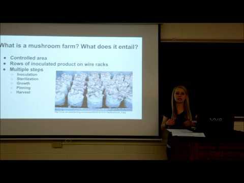 mushroom farm presentation