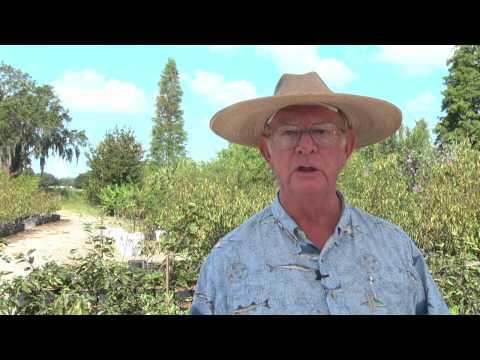 How to Grow Grapefruit Trees