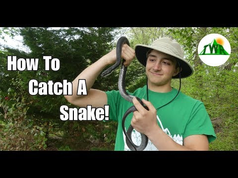 How to Find and Catch a Snake In Your Yard! (Bare Handed)~4K