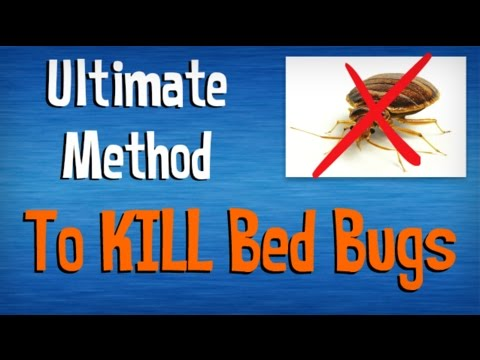 How to Kill Bed Bugs FAST | Best Advice on Killing Bed Bugs Yourself | Natural Pest Control Tips