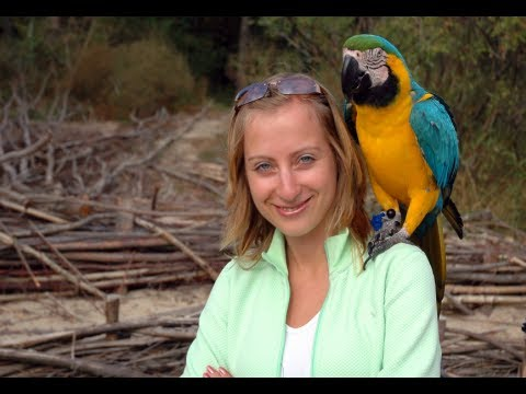 How to Train Parrots to Talk - Train Bird to Talk Today