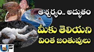 ప్రపంచంలో మీకు తెలియని కొన్ని వింత జంతువులు | Top Unknown animals in the world | UnknownFacts Telugu