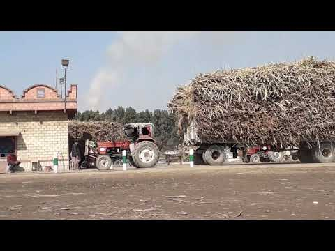 Two FIAT 640 Tractor Heavy Pulling Trolley for Checking Weight in Madina Sugar Mill