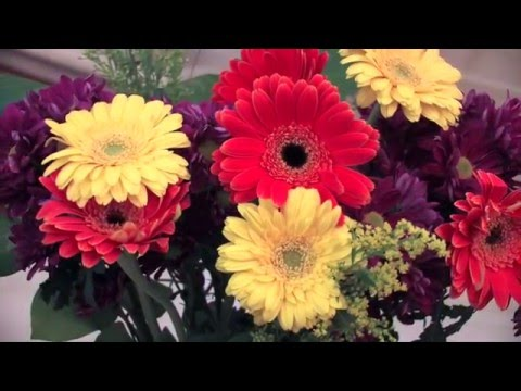 Preserving Cut Flowers