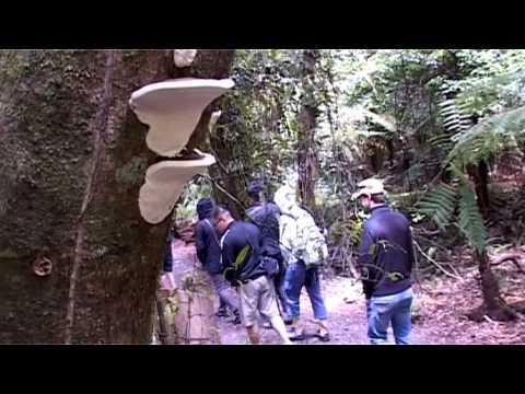 Wellington Rover Tours - Wellington, New Zealand - ONZAMAP.co.nz