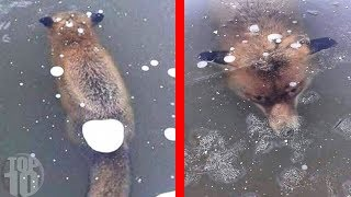 ANIMALS THAT ARE FROZEN IN TIME