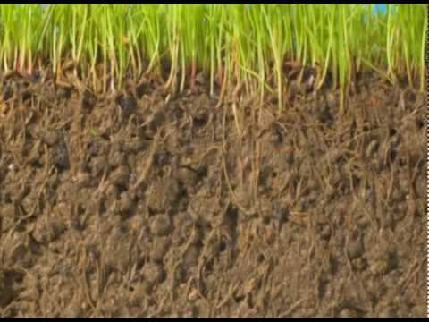 GrassBlast: Grow Fuller Healthy Greener Grass! From the Makers of RootBlast Fertilizer