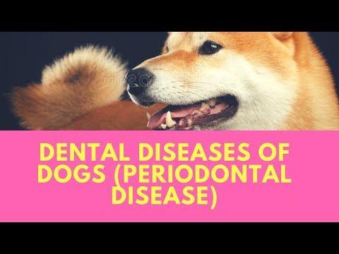 Dental Diseases of Dogs (Periodontal Disease)