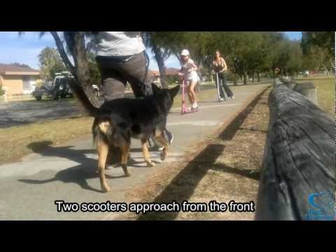 Barking and lunging at scooters - how Diesel's behaviour was changed (CASI)